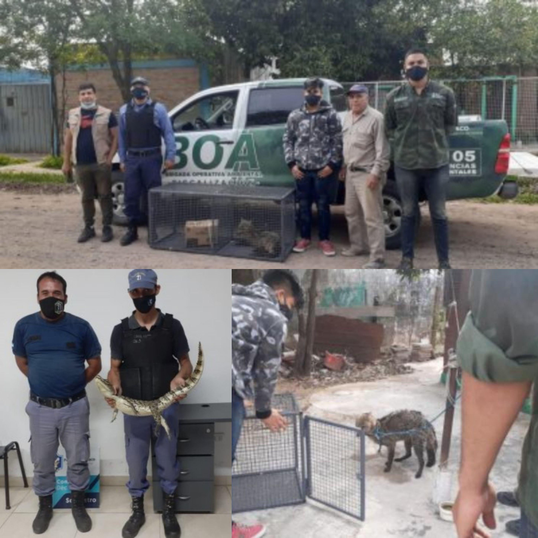 Resistencia: Un zorro y un yacaré sorprendieron a dos familias.