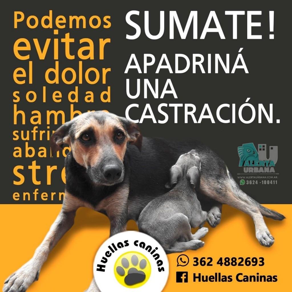 Desde Huellas Caninas destacan la importancia de la castración en los animales