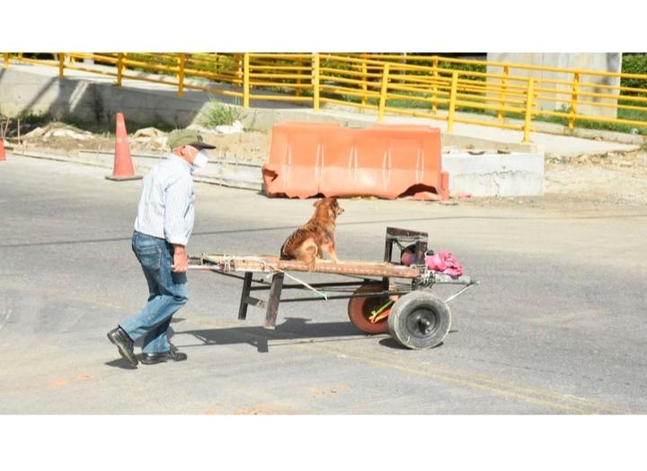 Abuelito lleva a su perrito en una carretilla para que lo acompañe al trabajo