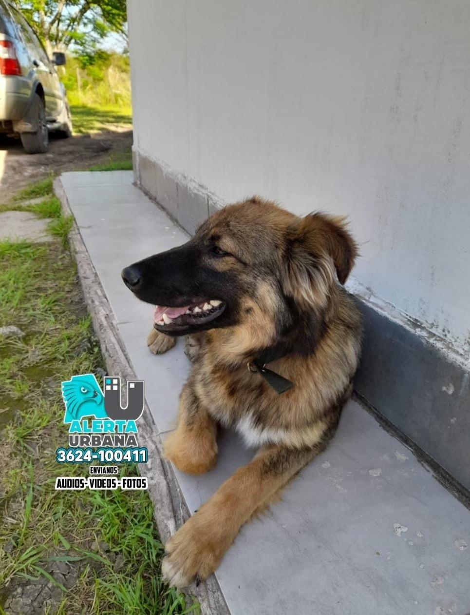Entre Ríos: adoptaron a Wilson el perro que fue atado a un palo en el río
