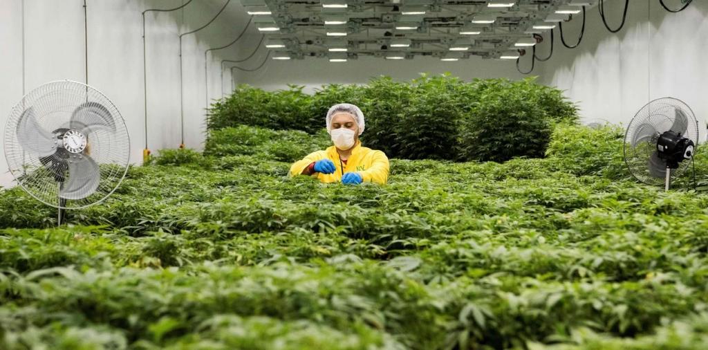 La Corte obligará a las obras sociales y al Estado a cubrir el tratamiento con cannabis medicinal
