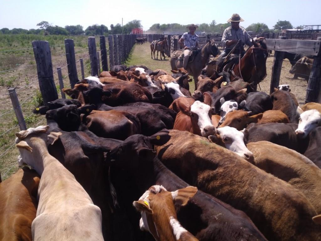 Buena organización y precios sellaron el éxito del remate ganadero de Pampa del Indio