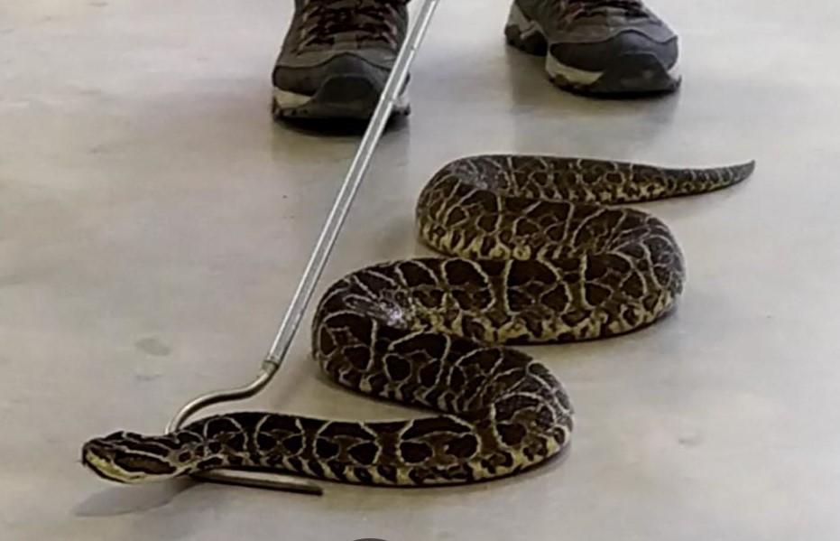 Destacan potencial de venenos y toxinas de serpientes del NEA para aplicaciones farmacológicas
