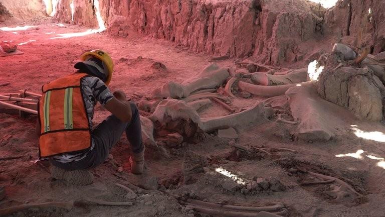Una trampa mortal de hace 30.000 años
