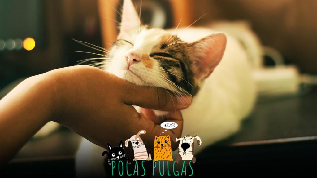 Cuáles son los beneficios de acariciar a un gato