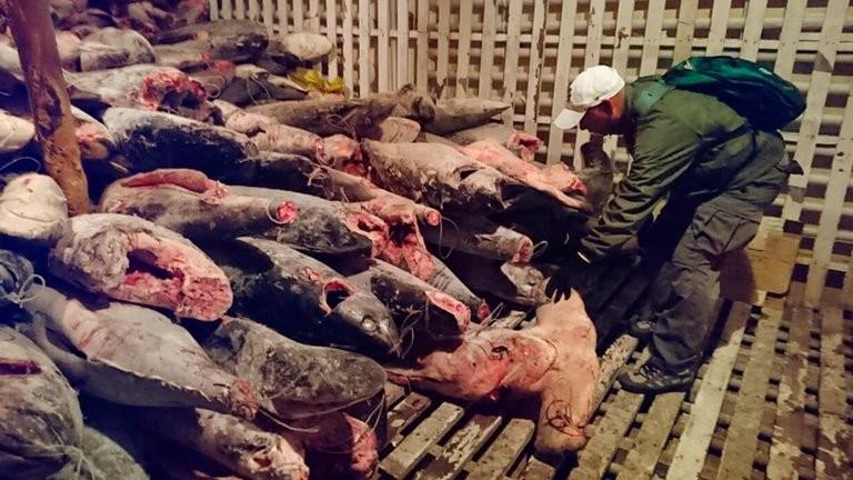 La pesca ilegal de la flota china acecha a Ecuador, Chile y Perú.