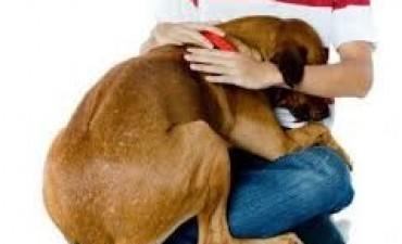 Que cuidados debemos tener en el uso de la pirotecnia dentro del domicilio y como reconocer los síntomas de estrés o fobia luminaria de los animales.