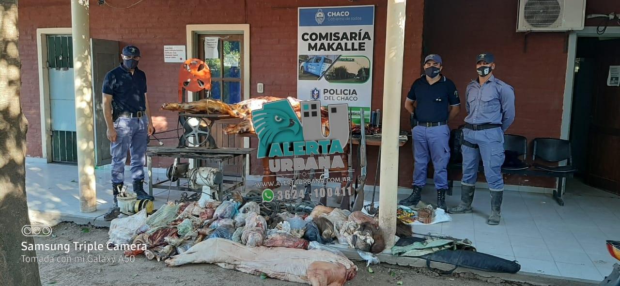 Allanamiento por supuesto abigeato de gran magnitud  en Makallé